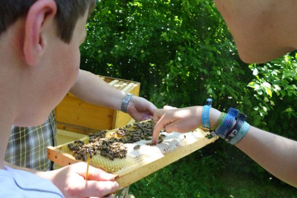 Bienenkunde